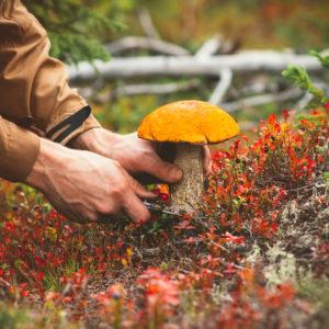 A man picks a mushroom in the wild