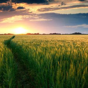 Sunshine and green field