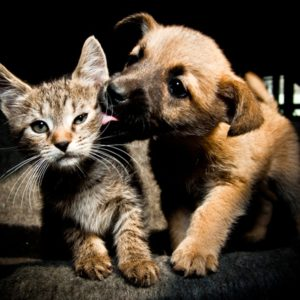 Puppy licking kitten's face