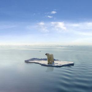 a polar bear alone on an ice floe