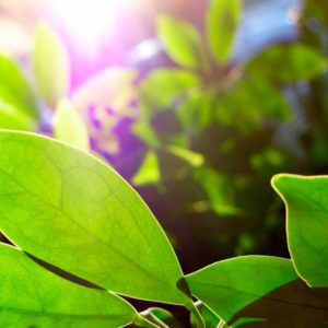 Green plants in sunshine