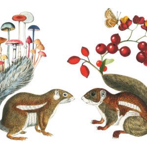 Squirrels illustration