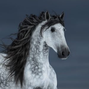 Wild horse with long mane
