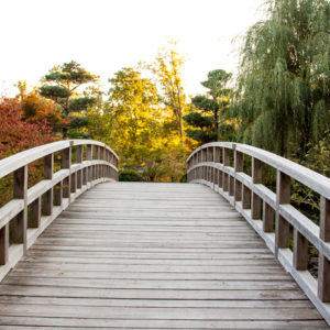 Wooden bridge,  leading to a garden filled with trees.