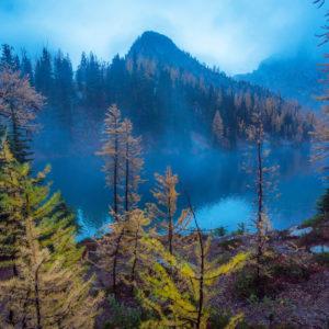 forest mountain scene