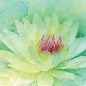 watercolor lotus flower graphic