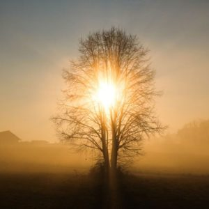 Silhouette tree with sun rays