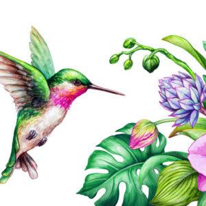 watercolor of hummingbird