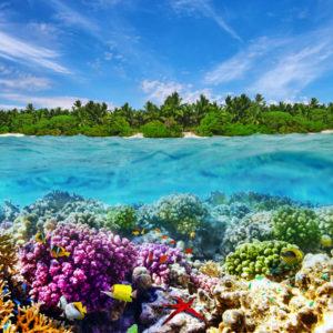 beautiful reef