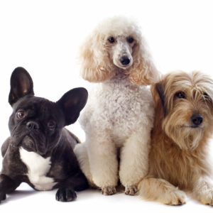 Happy dogs with balanced dosha