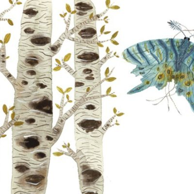 Illustrations of birch trees and butterfly