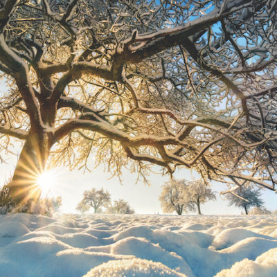 Winter rural landscape with the sun shining behind a beautiful snow-covered tree on a field, with blue sky