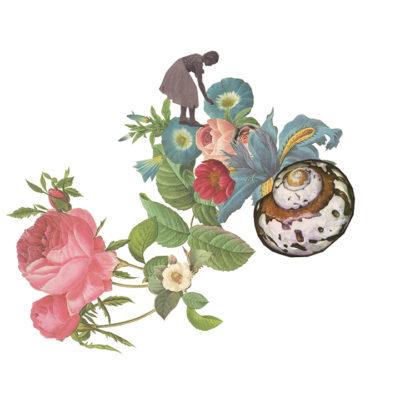 illustration of sea shell