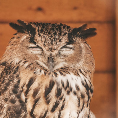 Image of night owl for Norse practice of how to sleep better and cure insomnia