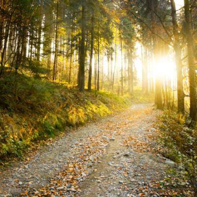 <em>Edit Article</em> Indigenous Wisdom Illuminates the Path to a Sustainable Future