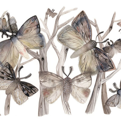 Painting of moths and tree branches