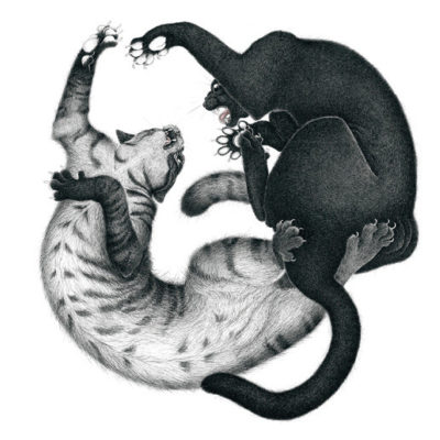 Two cats fighting each other