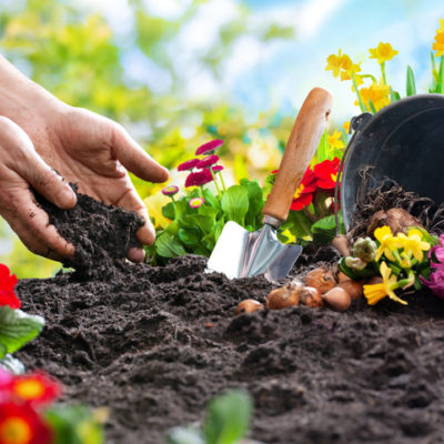Gardening, Planting spring flowers in the garden