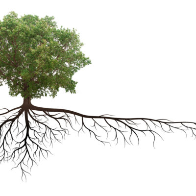 A tree with deep roots