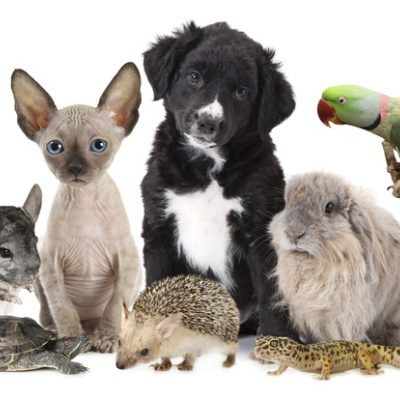 Large group of different animals for animal-inclusive language