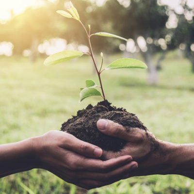 two hands planting together