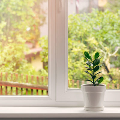 Small plant in window
