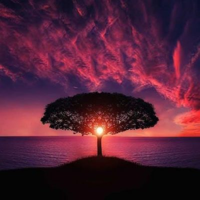 tree with sunset and sun peaking through tree branches