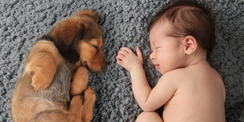 Baby girl sleeping with dachschund puppy