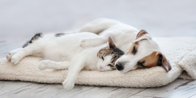 A dog and cat snuggle