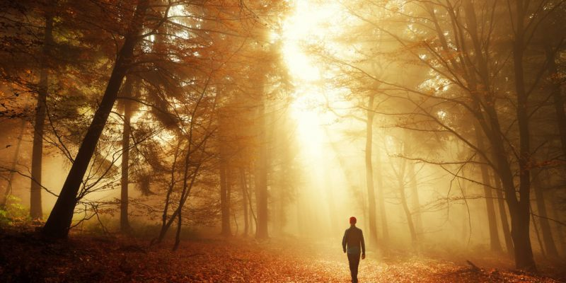 Man walking in woods with golden light