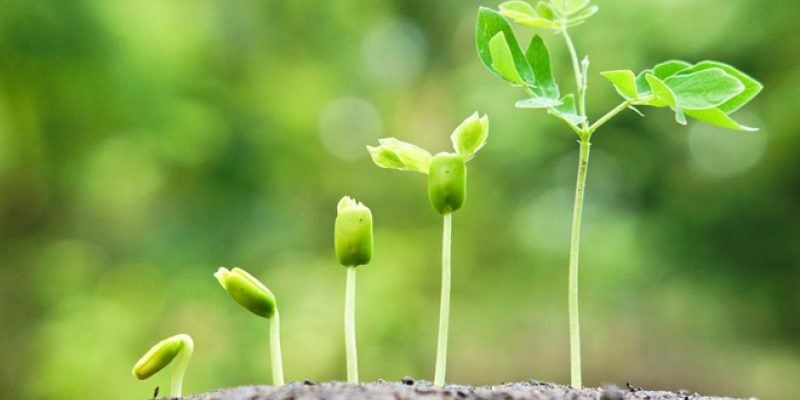 Stages of a plant growing