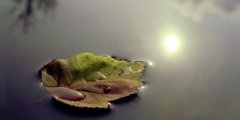 Leaf floating on water illustrates meditation practices