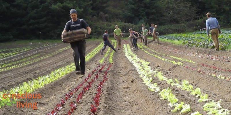 People tending soil and plants on organic farm