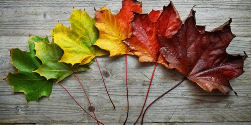 fall leaves changing during scorpio season