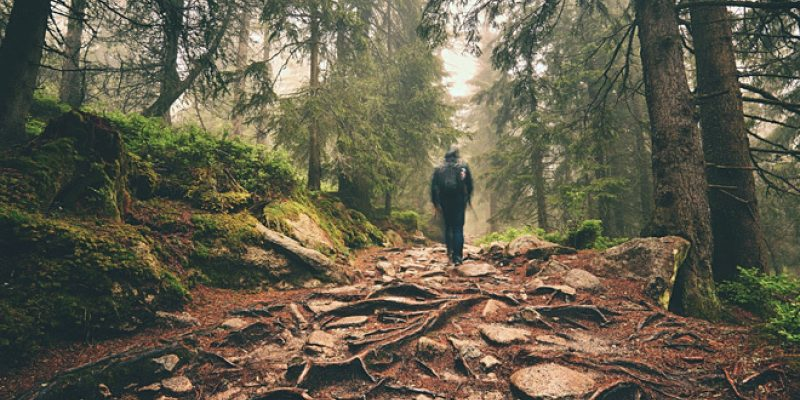 walking through forest
