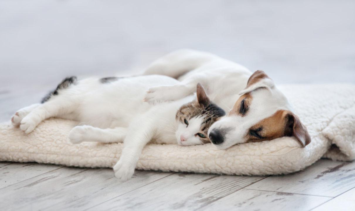 A dog and cat snuggle