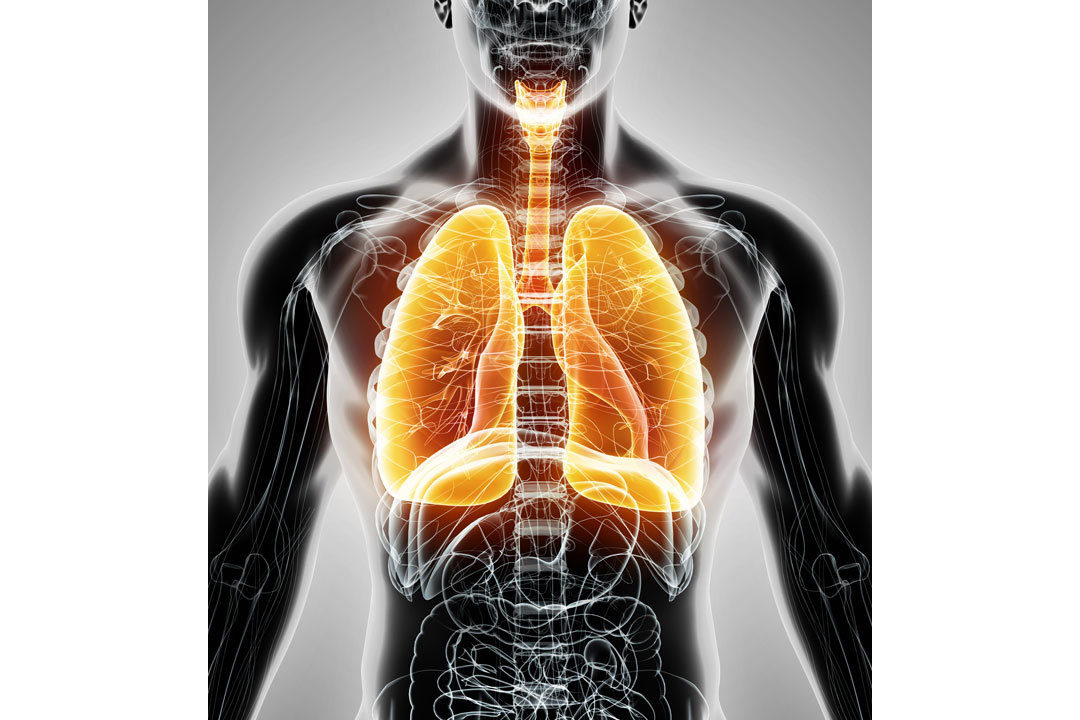 Diagram showing respiratory systems