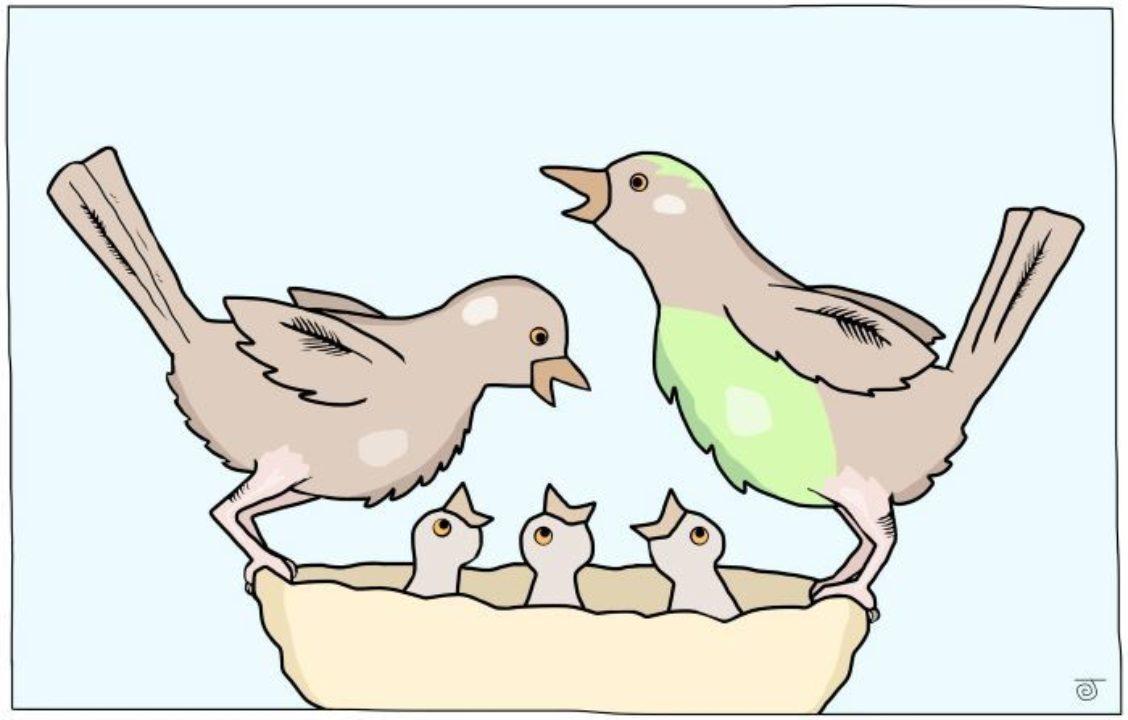 A bird family in a nest