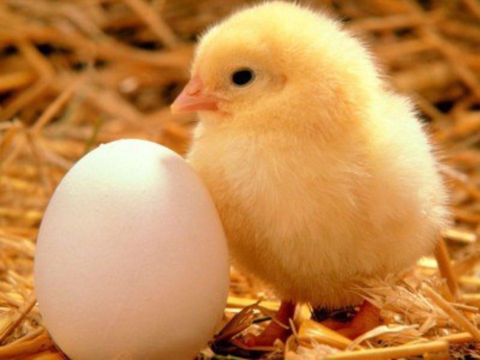 Chicken & Egg Meditation