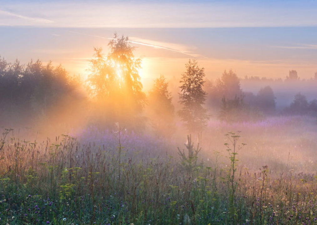 sun filtering through field