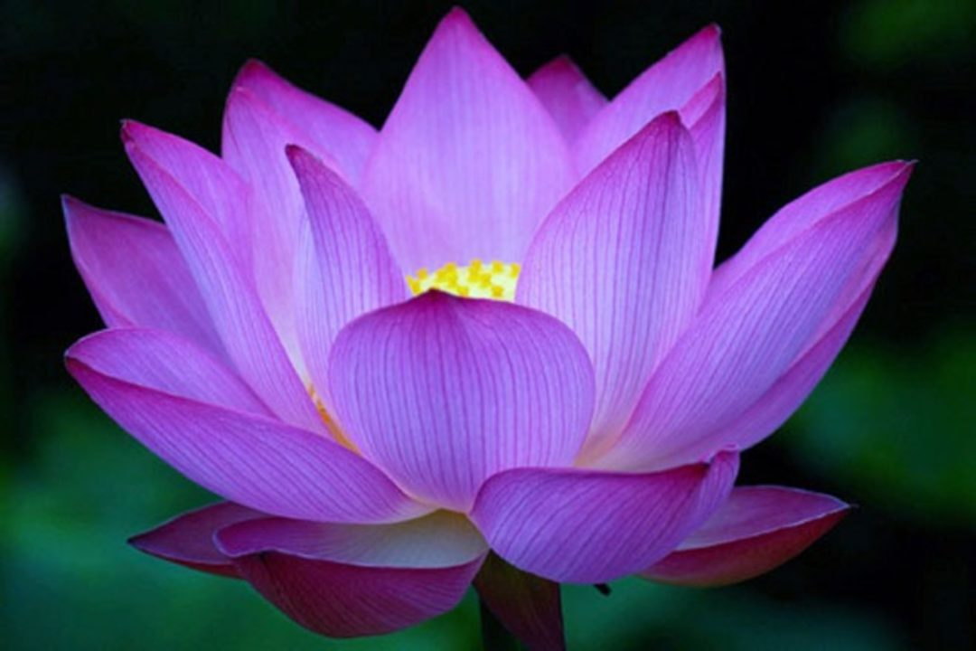 Using Flowers To Enhance Chakra Energy Flow Spirituality Health