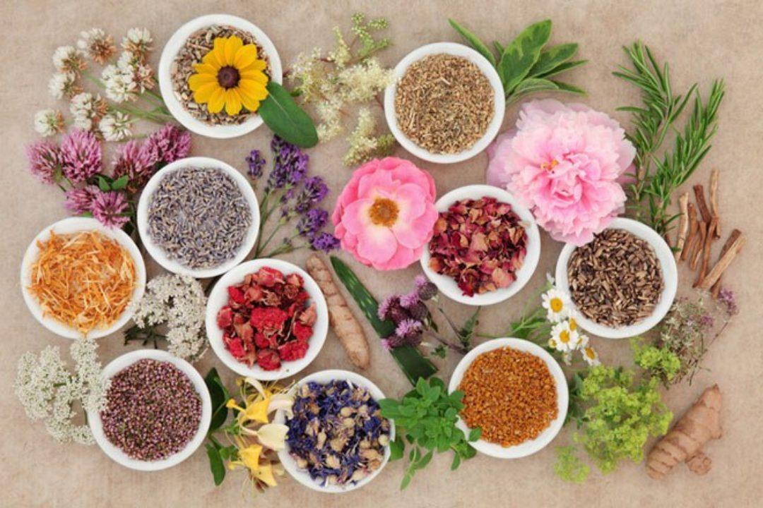 colorful flowers and herbs from above