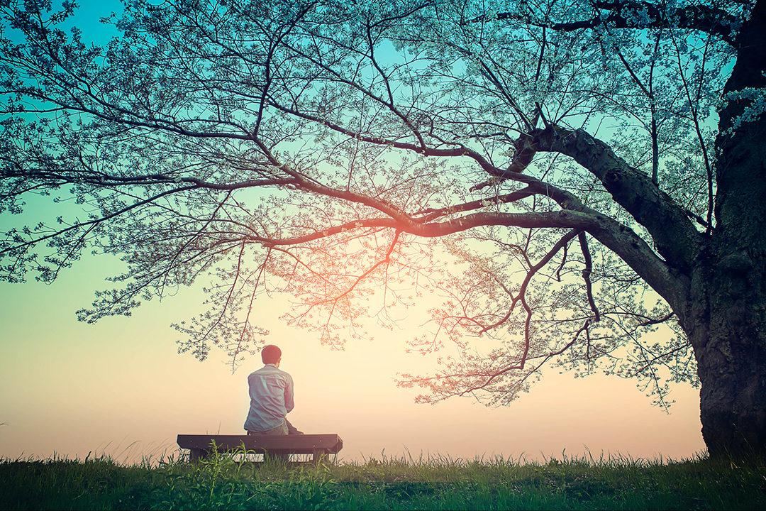 Man on bench under tree