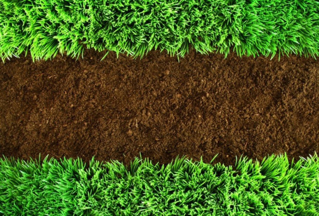 the grass is always greener on the other side essay