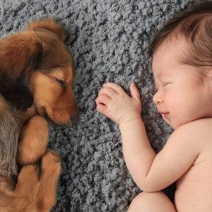 Baby girl sleeping with dachschund puppy