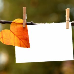 Notecard and leaf on line