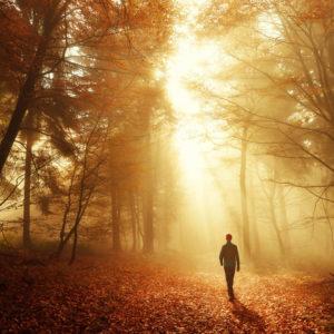 Man walking in woods with golden light