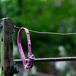 Pink pet collar empty on fence