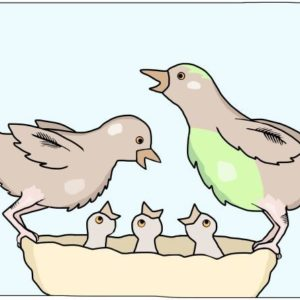 A bird family in a nest