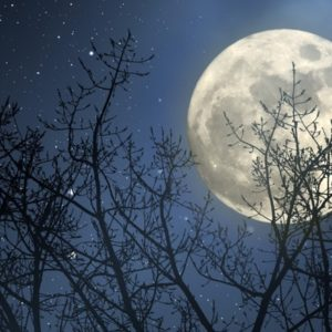Large full moon with silhouette trees